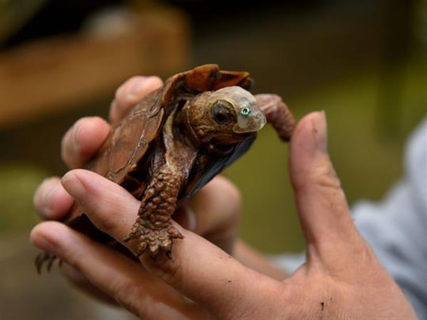 Черепаха с 3D-маской